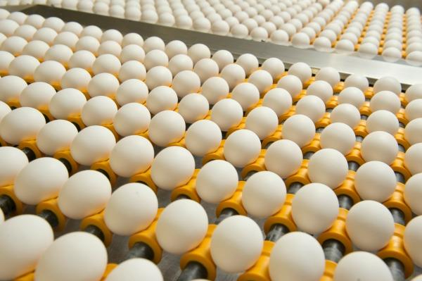 Moba Clean eggs