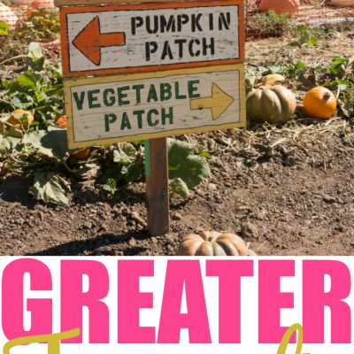 10 Toronto Area Pumpkin Patches