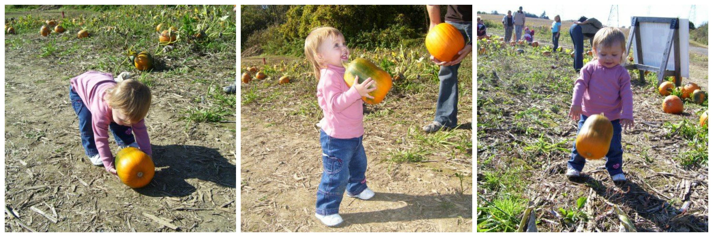 pumpkin-patches_toronto_2