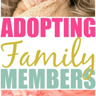 The Road To Adopting A Kitten